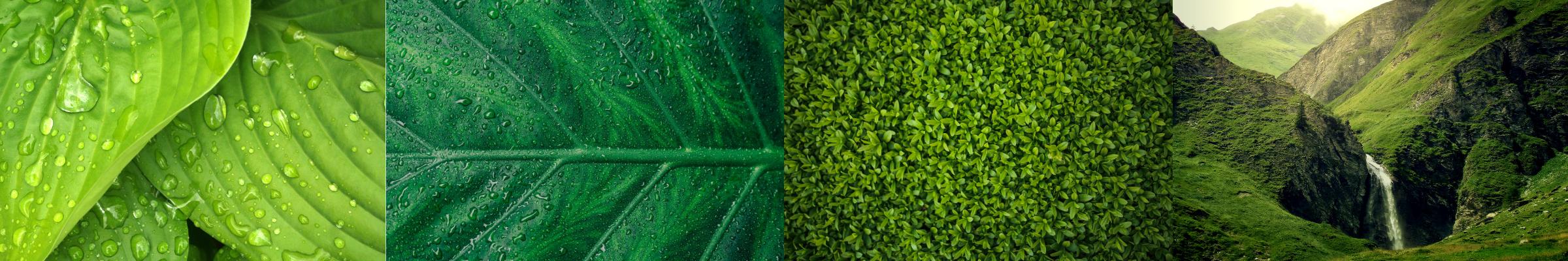 sostenibilità company profile